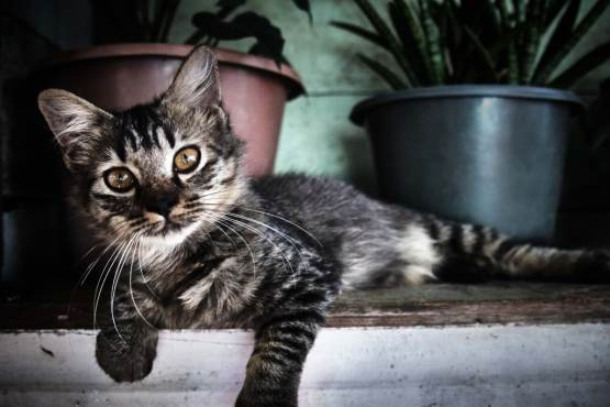 Most Friendly Cat Cities