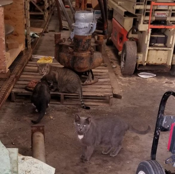 feral cats NYC