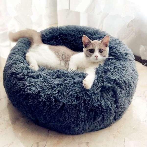 cat arthritis cat bed