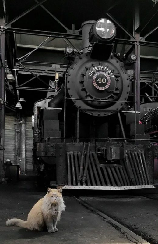Dirt the Railway Cat 2