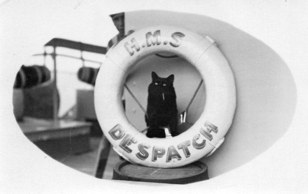 Ships Cats