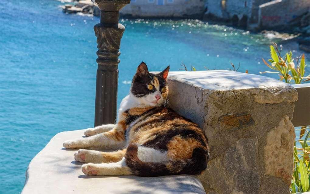 syros cat