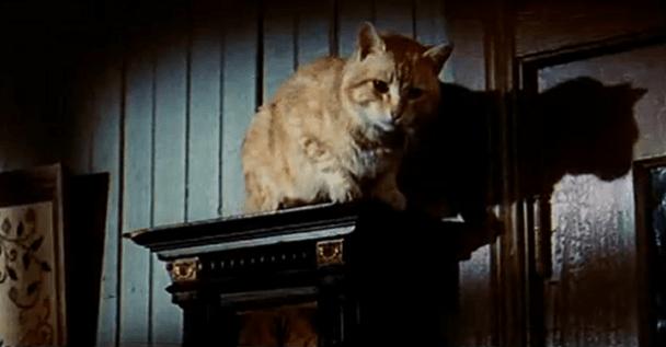cat actor