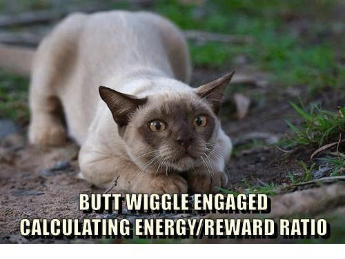 cat butt wiggle