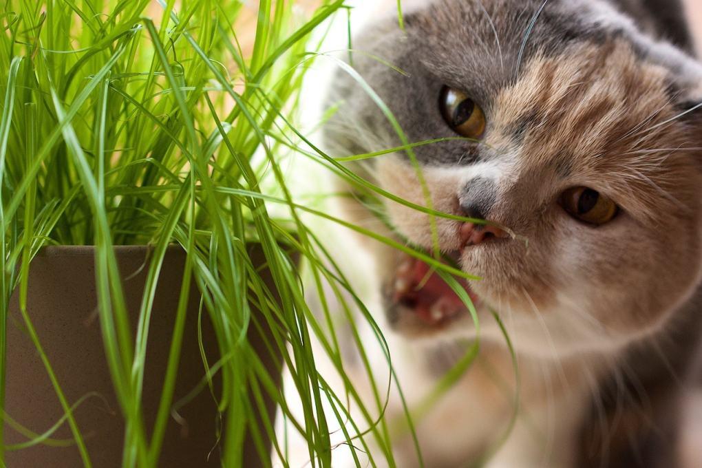 cat destroying houseplants 2