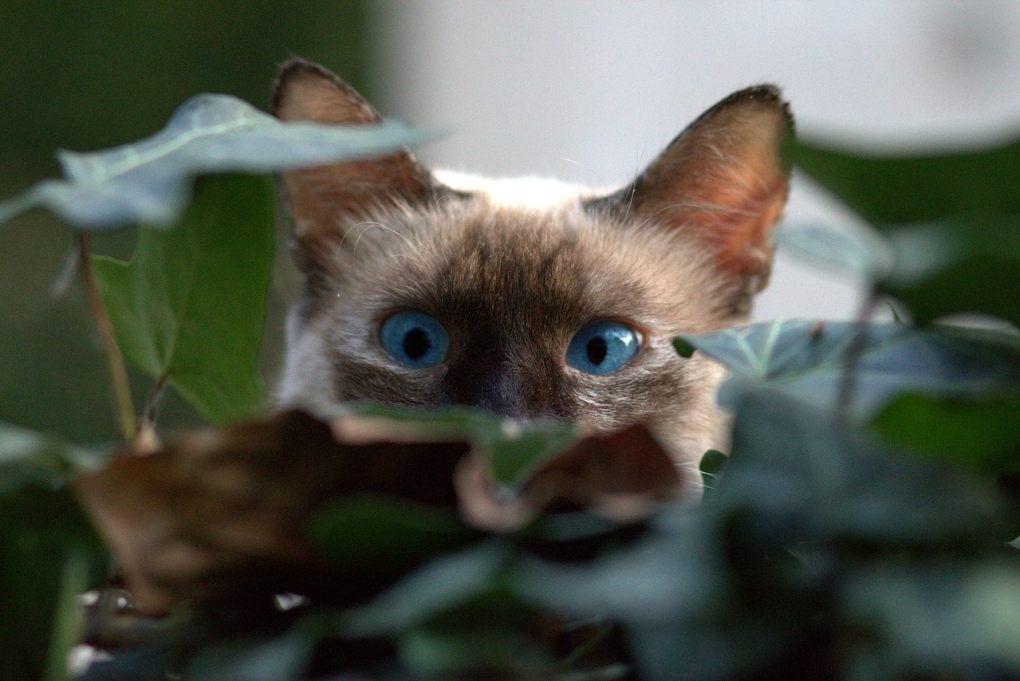 cat destroying houseplants