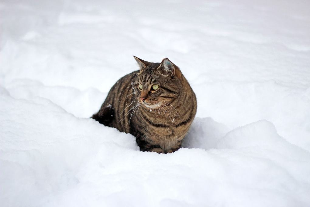 How to Keep your Cat Warm in Winter
