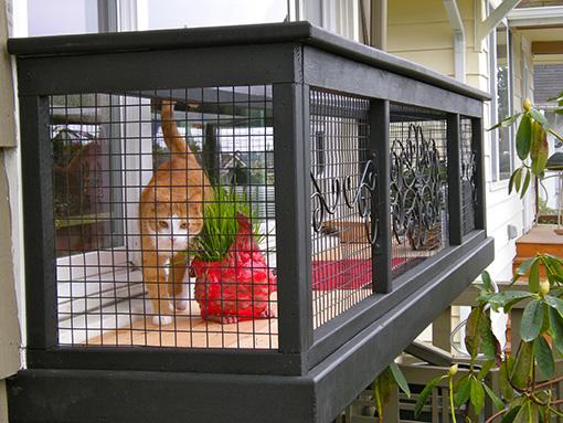 window-catio