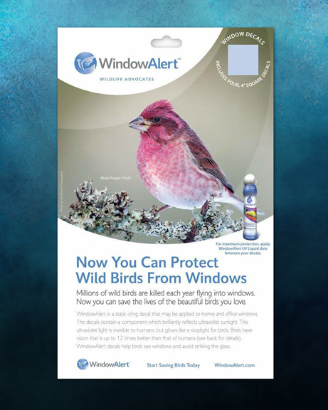 Window Alert