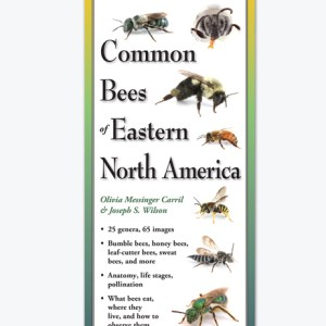 Common Bees Guide