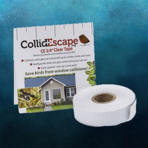CollidEscape