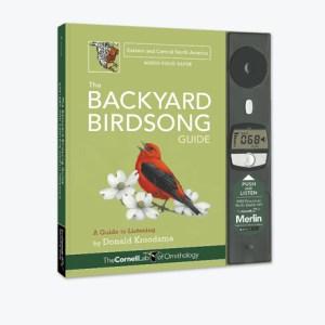 Backyard Birdsong