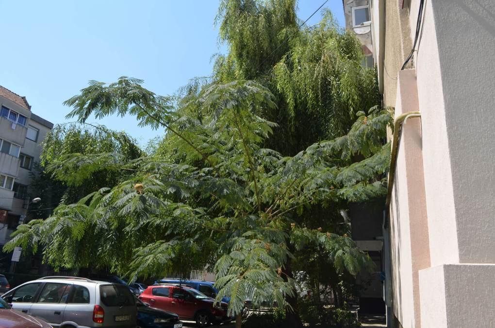 copaci ramnicu sarat