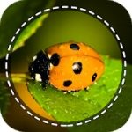 insect identifier app by photo mod apk