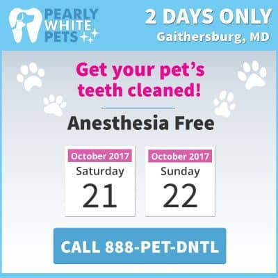 Pearly White Pets anesthesia-free teeth cleaning: https://pearlywhitepets.com