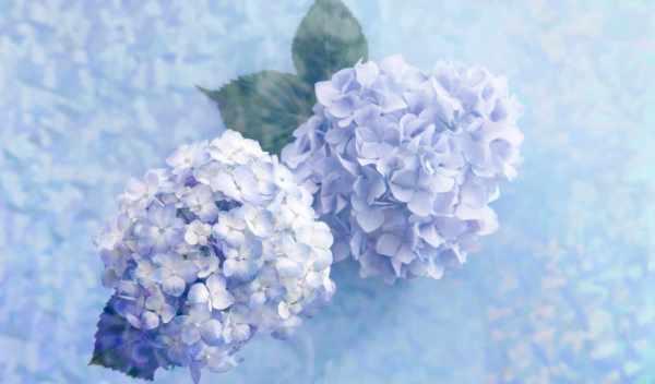 Обои цветы, blue, gentle, раздел Цветы, размер 2560x1600 ...