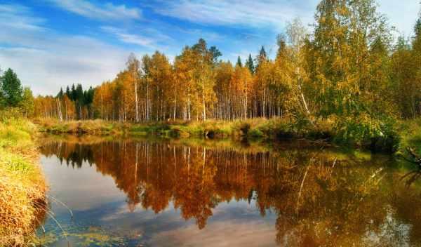 Обои осень, природа, лес Фон № 83886 , раздел Природа ...