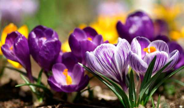 Обои весна, ранняя, весны , раздел Цветы, размер 1600x1200 ...