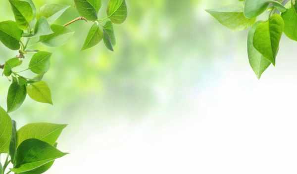 Обои весна, зелень , раздел Природа, размер 1920х1080 full ...