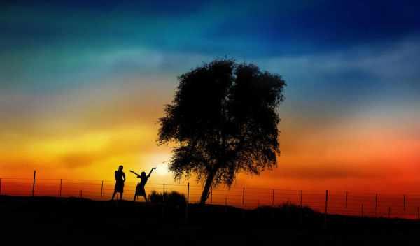 Обои дерево, закат, под, раздел Песочница, размер ...