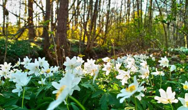 Обои и картинки поляна, весна, цветами , раздел Природа ...