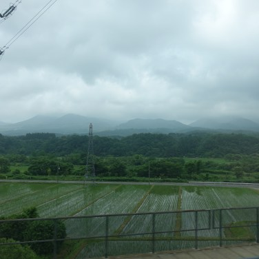 Rice paddies with a mountain backdrop
