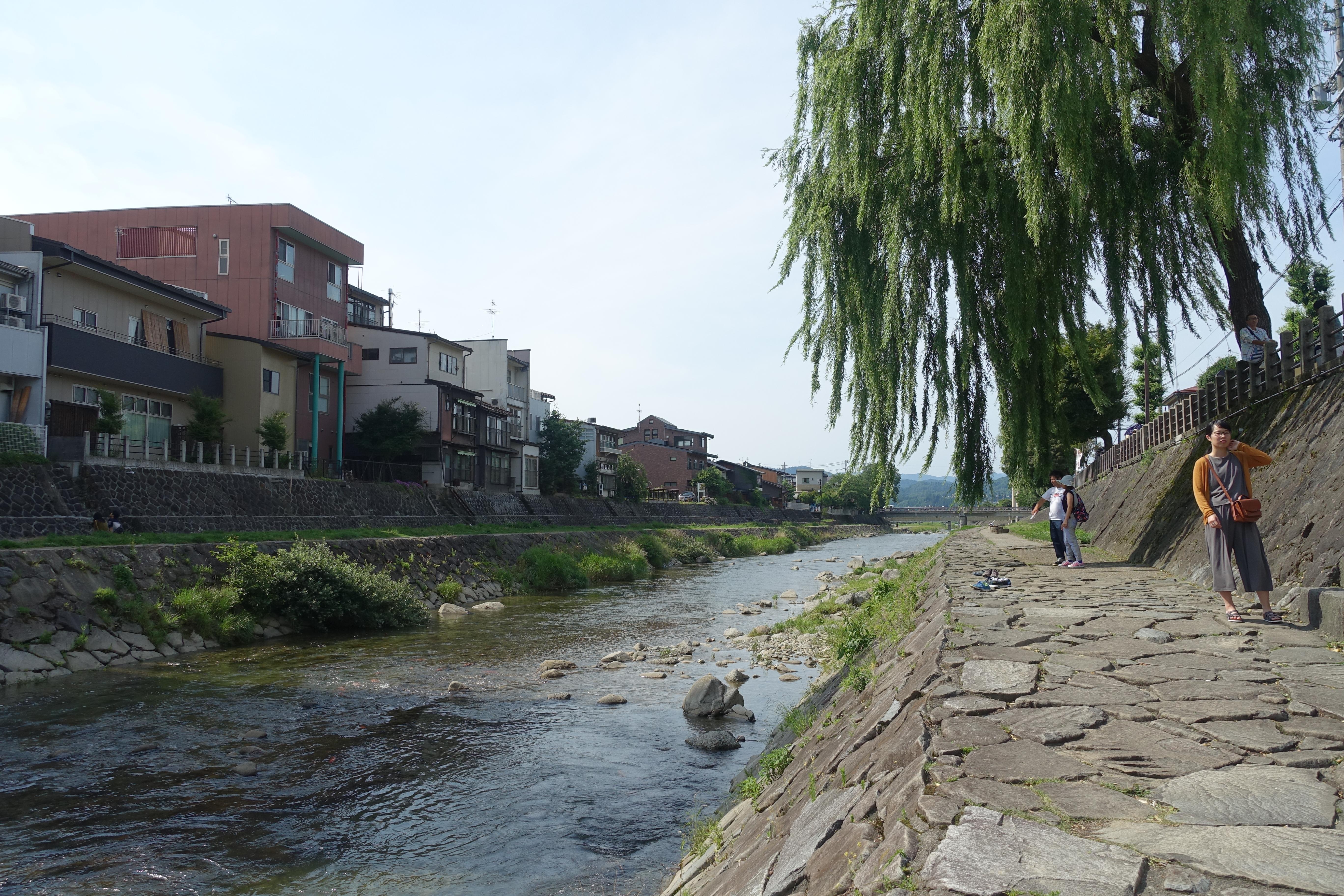 Miyagawa river with willow tree
