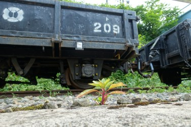 A plant growing in front of a freight car