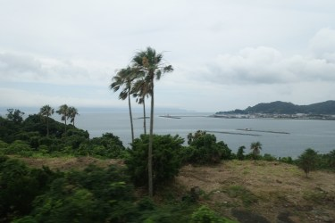 Sea view, with palms