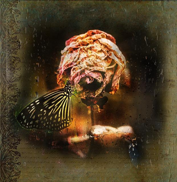 Verwelkte roos en vlinder