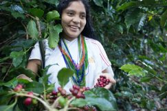 Since 2014, Caffè Spettacolo has been using coffee from the ANEI cooperative in northern Colombia.