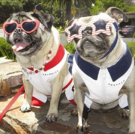 Minnie & Max the Pugs