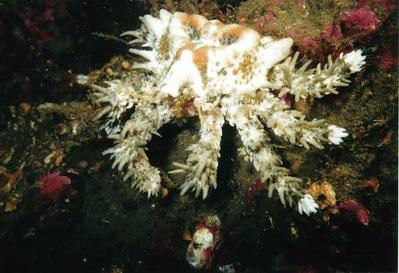 heart-crab-2