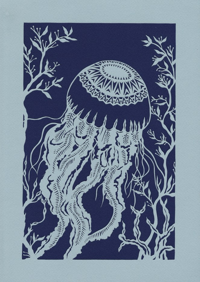 Small Compass Jellyfish, 2016