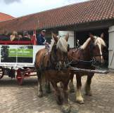 Brewery horses