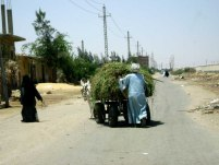 Rural Atmosphere in Suez