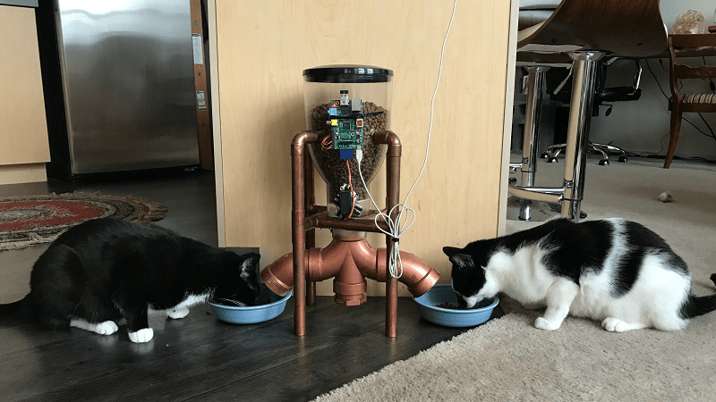 Feeder with Cats