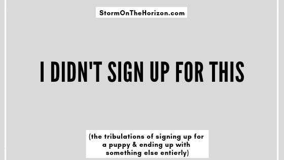 title image for Storm on the Horizon: I didn't sign up for this