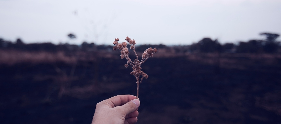 someone holding out a purple flower, in front of a shadowed, open field.