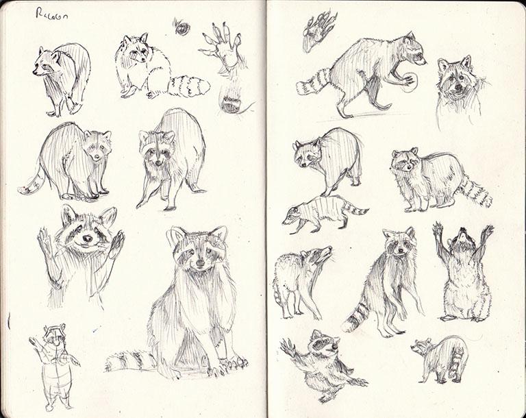 Raccoon sketchbook page