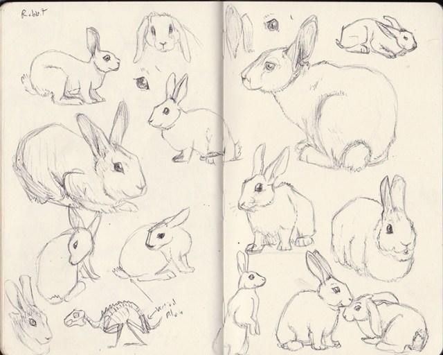 rabbit study sketches