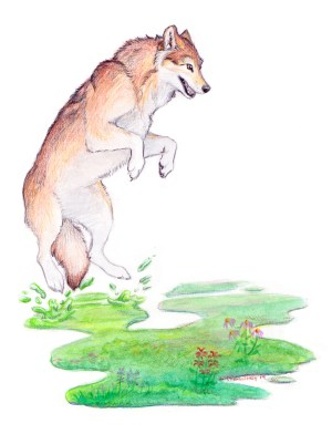 a bouncing red wolf