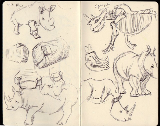 white rhino sketches
