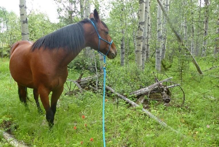 horse n wagon