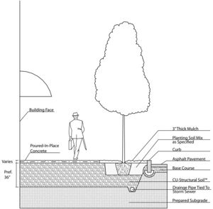 Construction guidelines for tree trenches and tree boxes  Minnesota Stormwater Manual