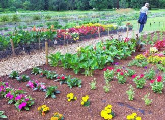 Flower gardens flower beds RHS