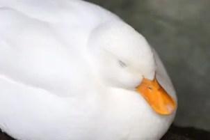 鳥のモチーフ
