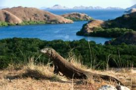 Komodo National Park - Indonesia
