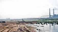 The healthy Ennore riverbed facilitated the breeding of mud crabs. The species disappeared after the locality is contaminated with fly ash.