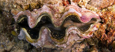 There were giant clams all over the place - up to a meter!